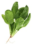 spinach_plant