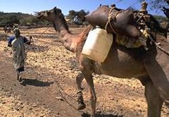 Camel carrying water