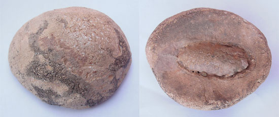 Fossil of Fruit