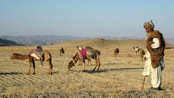 Baluchi Camel Man