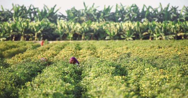 fertile-land