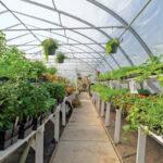 Horticulture Nursery